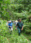 A Hike in da Woods